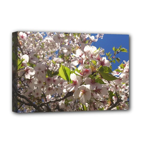 Cherry Blossoms Deluxe Canvas 18  X 12  (framed) by DmitrysTravels