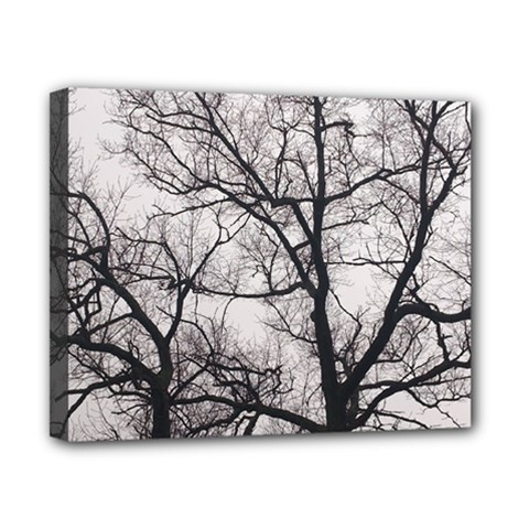 Tree Canvas 10  X 8  (framed) by DmitrysTravels