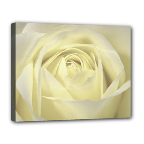 Cream Rose Canvas 14  X 11  (framed) by Colorfulart23