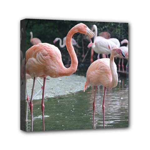 Img 2651flamingo Birds Mini Canvas 6  X 6  (framed) by stineshop