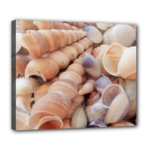 Sea Shells Deluxe Canvas 24  X 20  (framed) by yoursparklingshop