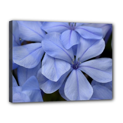 Bright Blue Flowers Canvas 16  X 12  by timelessartoncanvas