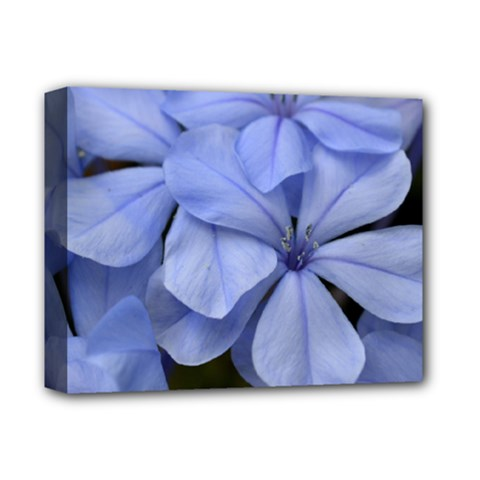 Bright Blue Flowers Deluxe Canvas 14  X 11  by timelessartoncanvas