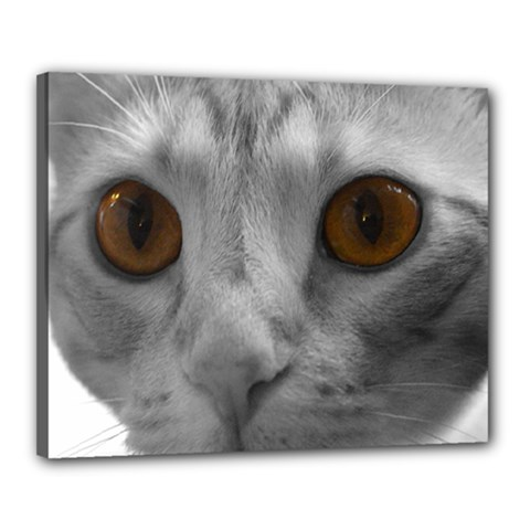 Funny Cat Canvas 20  X 16