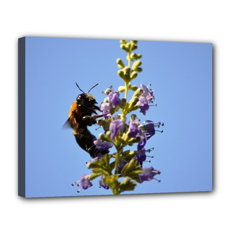 Bumble Bee 1 Canvas 14  X 11  by timelessartoncanvas