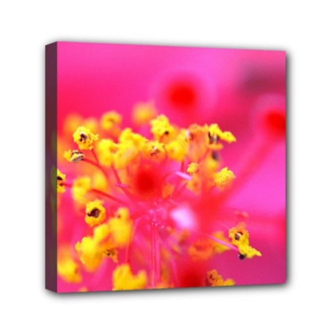 Bright Pink Hibiscus Mini Canvas 6  X 6  by timelessartoncanvas
