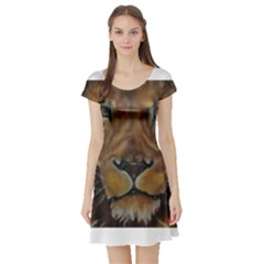 Cecil The African Lion Short Sleeve Skater Dresses by timelessartoncanvas