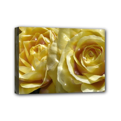 Yellow Roses Mini Canvas 7  X 5  by MoreColorsinLife