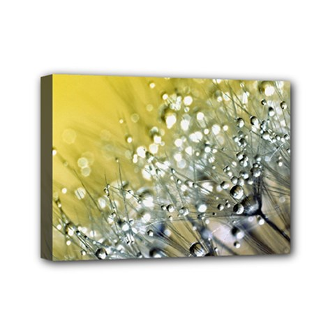 Dandelion 2015 0713 Mini Canvas 7  X 5  by JAMFoto