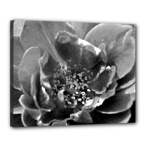 Black And White Rose Canvas 20  X 16  by timelessartoncanvas