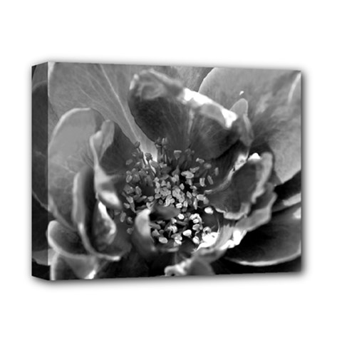 Black And White Rose Deluxe Canvas 14  X 11  by timelessartoncanvas