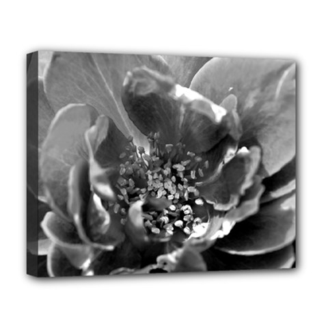 Black And White Rose Deluxe Canvas 20  X 16   by timelessartoncanvas