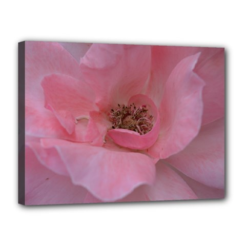 Pink Rose Canvas 16  x 12