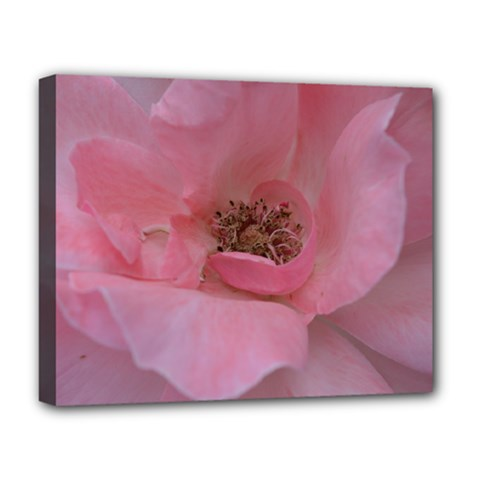 Pink Rose Deluxe Canvas 20  x 16