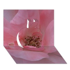 Pink Rose Apple 3D Greeting Card (7x5)