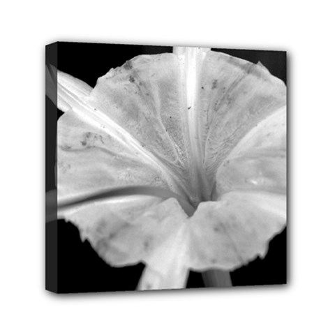 Exotic Black And White Flower 2 Mini Canvas 6  X 6  by timelessartoncanvas