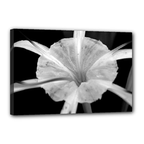 Exotic Black And White Flower 2 Canvas 18  X 12  by timelessartoncanvas