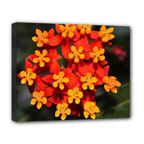 Orange And Red Weed Deluxe Canvas 20  X 16   by timelessartoncanvas