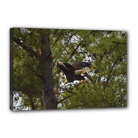Bald Eagle Canvas 18  X 12