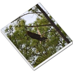 Bald Eagle 2 Small Memo Pads by timelessartoncanvas