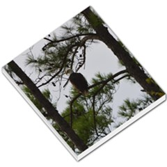 Bald Eagle 3 Small Memo Pads by timelessartoncanvas