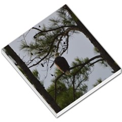 Bald Eagle 4 Small Memo Pads by timelessartoncanvas