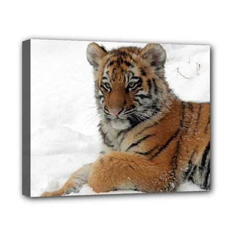 Tiger 2015 0101 Canvas 10  X 8  by JAMFoto