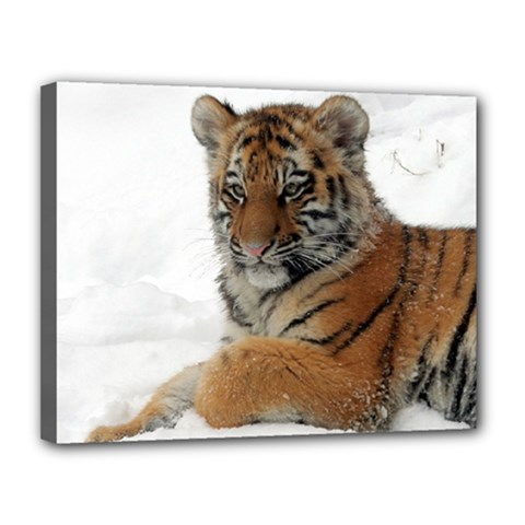Tiger 2015 0101 Canvas 14  X 11  by JAMFoto