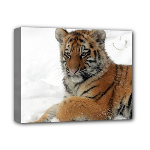 Tiger 2015 0101 Deluxe Canvas 14  X 11  by JAMFoto