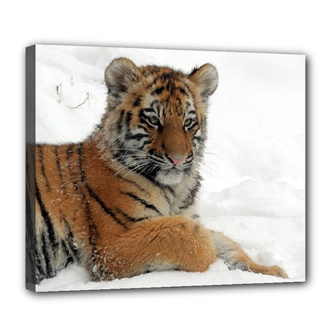 Tiger 2015 0102 Deluxe Canvas 24  X 20   by JAMFoto