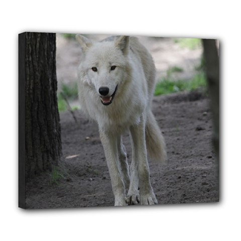White Wolf Deluxe Canvas 24  X 20   by MoreColorsinLife
