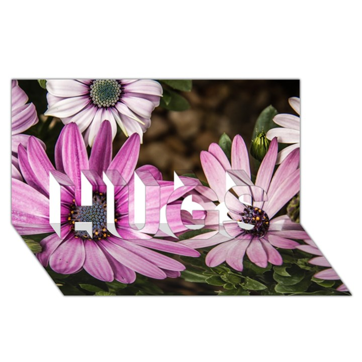 Beautiful Colourful African Daisies  HUGS 3D Greeting Card (8x4)