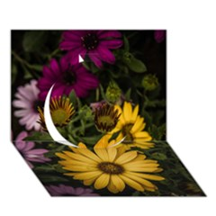 Beautiful Colourful African Daisies  Circle 3d Greeting Card (7x5)  by OZMedia