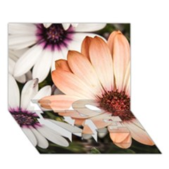 Beautiful Colourful African Daisies Love Bottom 3d Greeting Card (7x5)  by OZMedia