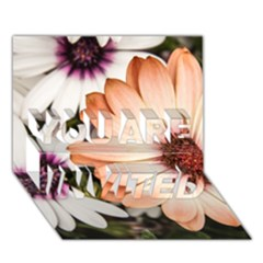 Beautiful Colourful African Daisies You Are Invited 3d Greeting Card (7x5)  by OZMedia