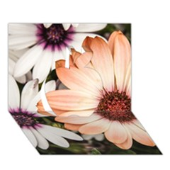 Beautiful Colourful African Daisies Apple 3d Greeting Card (7x5)