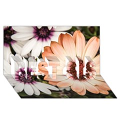 Beautiful Colourful African Daisies Best Sis 3d Greeting Card (8x4)  by OZMedia