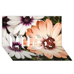 Beautiful Colourful African Daisies Hugs 3d Greeting Card (8x4)  by OZMedia