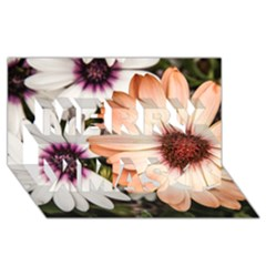 Beautiful Colourful African Daisies Merry Xmas 3d Greeting Card (8x4)  by OZMedia
