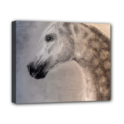 Grey Arabian Horse Canvas 10  X 8  by TwoFriendsGallery