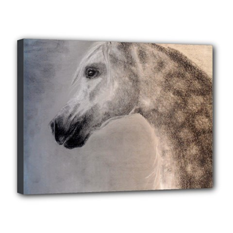 Grey Arabian Horse Canvas 16  X 12  by TwoFriendsGallery
