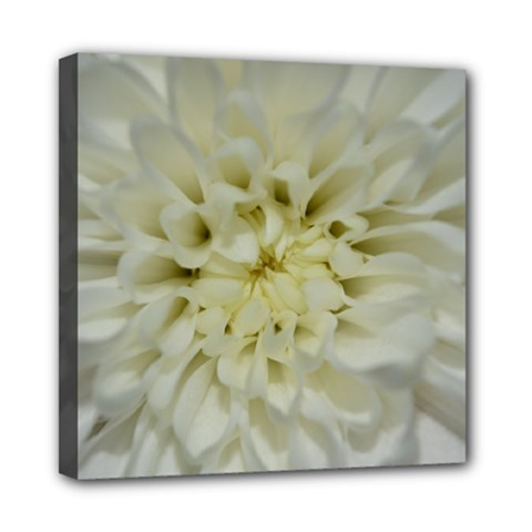 White Flowers Mini Canvas 8  X 8