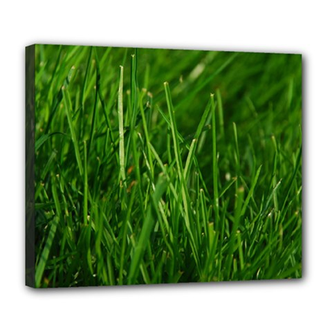 Green Grass 1 Deluxe Canvas 24  X 20   by trendistuff