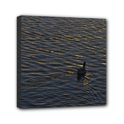 Lonely Duck Swimming At Lake At Sunset Time Mini Canvas 6  X 6  by dflcprints