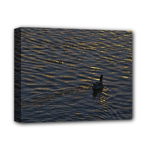 Lonely Duck Swimming At Lake At Sunset Time Deluxe Canvas 14  X 11  by dflcprints