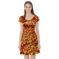 Orange Yellow  Saw Chips Short Sleeve Skater Dresses by Costasonlineshop