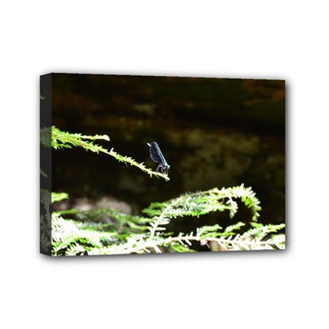 Nature s Stare Mini Canvas 7  X 5  by Naturesfinest