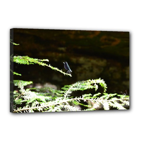 Nature s Stare Canvas 18  X 12  by Naturesfinest