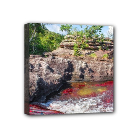 Cano Cristales 2 Mini Canvas 4  X 4  by trendistuff