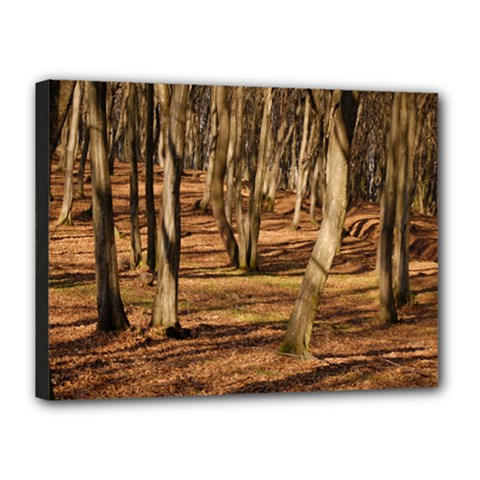 Wood Shadows Canvas 16  X 12  by trendistuff